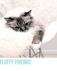 Fluffy Friends